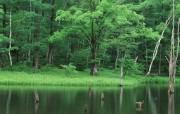 茂盛森林树木 壁纸2 茂盛森林树木 动物壁纸
