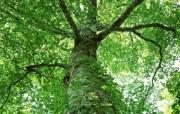 茂盛森林树木 壁纸4 茂盛森林树木 动物壁纸