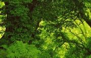 茂盛森林树木 壁纸8 茂盛森林树木 动物壁纸