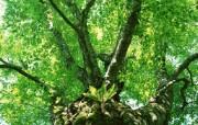 茂盛森林树木 壁纸18 茂盛森林树木 动物壁纸