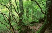 茂盛森林树木 壁纸22 茂盛森林树木 动物壁纸