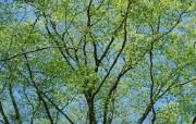 茂盛森林树木 壁纸24 茂盛森林树木 动物壁纸
