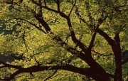茂盛森林树木 壁纸25 茂盛森林树木 动物壁纸