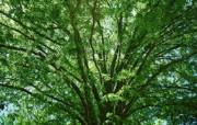 茂盛森林树木 壁纸26 茂盛森林树木 动物壁纸