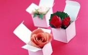 玫瑰 动物壁纸
