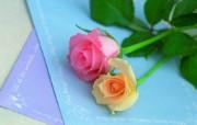 玫瑰花 动物壁纸