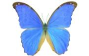 美丽的身姿butterfly 动物壁纸
