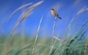 鸟类小鸟摄影主题 动物壁纸