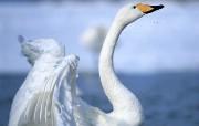 鸟类写真 动物壁纸