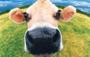 农场动物大杂绘 动物壁纸