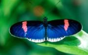 翩翩起舞!高清晰蝴蝶壁纸 动物壁纸