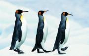 企鹅 动物壁纸