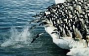 企鹅摄影壁纸 16 动物壁纸