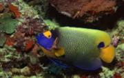 奇幻海底动物世界 动物壁纸