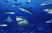 热带深海鱼壁纸 动物壁纸