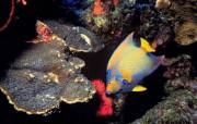 深海鱼壁纸 动物壁纸