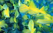 神秘的深海世界壁纸 动物壁纸