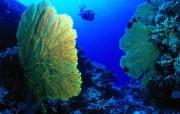 神秘色彩 海底世界生物壁纸 动物壁纸