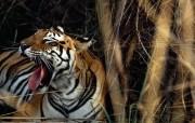 摄影师镜头下的野生动物 动物壁纸