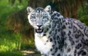 狮虎豹专辑 2 15 狮虎豹专辑 动物壁纸