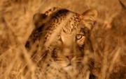 世界地理动物篇 3 9 世界地理动物篇 动物壁纸