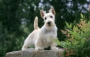 世界名狗宽屏高清壁纸 动物壁纸