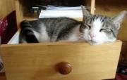 世界名猫宽屏高清壁纸 壁纸5 世界名猫宽屏高清壁纸 动物壁纸