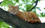 世界名猫宽屏高清壁纸 壁纸11 世界名猫宽屏高清壁纸 动物壁纸