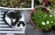世界名猫宽屏高清壁纸 壁纸13 世界名猫宽屏高清壁纸 动物壁纸