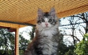 世界名猫宽屏高清壁纸 壁纸18 世界名猫宽屏高清壁纸 动物壁纸