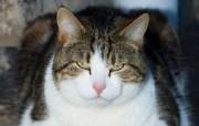 世界名猫宽屏高清壁纸 壁纸21 世界名猫宽屏高清壁纸 动物壁纸