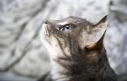 世界名猫宽屏高清壁纸 壁纸22 世界名猫宽屏高清壁纸 动物壁纸