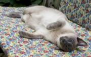 世界名猫宽屏高清壁纸 壁纸29 世界名猫宽屏高清壁纸 动物壁纸