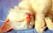 睡睡猫壁纸 动物壁纸