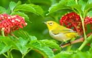 树林里的小精灵 春天可爱小鸟壁纸 如画般的小鸟 艳丽小鸟图片壁纸 树林里的小精灵可爱小鸟 动物壁纸