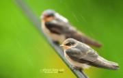 树林里的小精灵 春天可爱小鸟壁纸 春天林间小鸟 灵气小鸟图片壁纸 树林里的小精灵可爱小鸟 动物壁纸