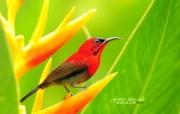 树林里的小精灵 春天可爱小鸟壁纸 黄腹太阳鸟雄鸟 如画般的艳丽小鸟图片壁纸 树林里的小精灵可爱小鸟 动物壁纸