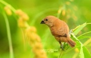 树林里的小精灵 春天可爱小鸟壁纸 斑文鸟 春天林间小鸟图片壁纸 树林里的小精灵可爱小鸟 动物壁纸