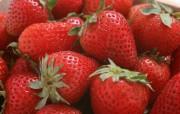 硕果累累草莓篇 动物壁纸