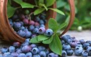 硕果累累蓝莓篇 动物壁纸