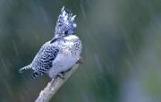 四季鸟类小鸟摄影三 动物壁纸