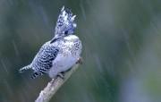 四季鸟类 动物壁纸