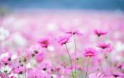 甜蜜蜜的花朵 高清壁 动物壁纸