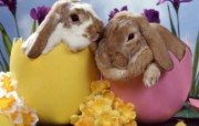 兔子写真特辑 壁纸2 兔子写真特辑 动物壁纸