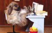 兔子写真特辑 壁纸3 兔子写真特辑 动物壁纸