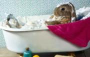 兔子写真特辑 壁纸4 兔子写真特辑 动物壁纸