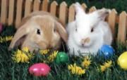 兔子写真特辑 壁纸5 兔子写真特辑 动物壁纸
