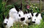 兔子写真特辑 壁纸6 兔子写真特辑 动物壁纸