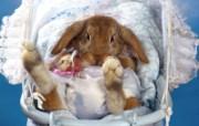 兔子写真特辑 壁纸7 兔子写真特辑 动物壁纸