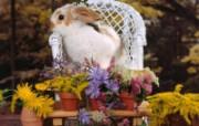 兔子写真特辑 壁纸8 兔子写真特辑 动物壁纸
